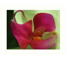 Seductive Orchid Art Print