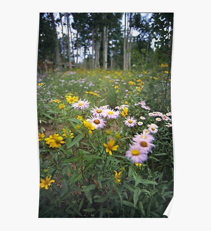 Wildflowers, Grand Mesa, Colorado Poster