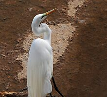 Egret Stance by Bonnie T.  Barry