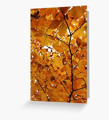 Yellow-Orange Greeting Card
