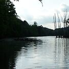 SOUTH HOLSTON TAILWATERS by ELIZABETH B