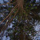 TREE ? by ELIZABETH B