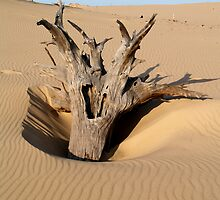 Driftwood 1 by BarbL