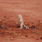 Ground Squirrel... by Anthony Catt