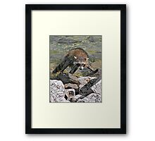 Coon Kingdom Framed Print