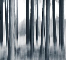 in the woods by Dorit Fuhg