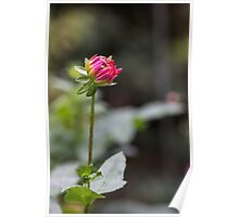 Lonely Flower Poster