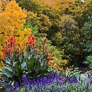 Autumn Landscape by Sharlene Rens