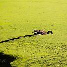 Water Trails by Sharlene Rens