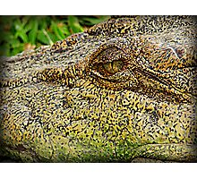 Crocodile eye Photographic Print