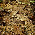 crocodillians by PeaceM