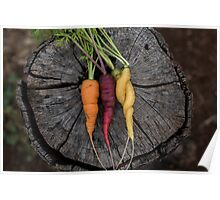 Multicoloured carrots Poster
