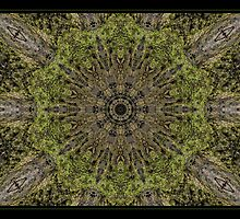 Nature's Kaleidoscope by Rachael Taylor