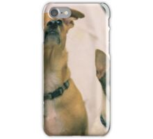 Cheweenie and chihuahua dogs iPhone Case/Skin