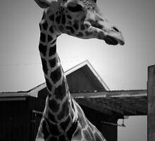 Haughty Giraffe in BW by ArtistryBySonia