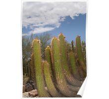 Arizona Desert Cactus Poster
