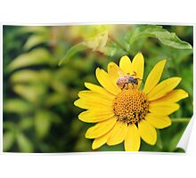 Honeybee on Yellow Flower Poster