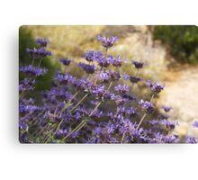 Purple Desert Flowers IV Canvas Print