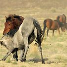 Horse Play by Gene Praag