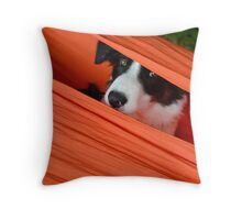 Border Collie dog in orange hammock Throw Pillow