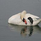 swan yoga by RichImage