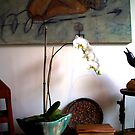Display at the Diving Cat Shoppe by Judi Taylor