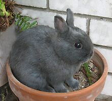 I am a Little Potted Bunny Rabbit Photographic Print