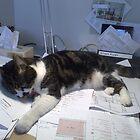 My Desk ~ Mine All Mine by bobmarks