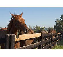 Horse Sunset Photographic Print