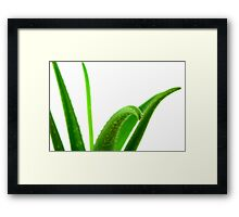 Aloe Vera Framed Print