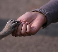 Just one touch... by Yashani Shantha