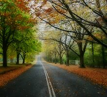 Autumn Journey by Kim Roper