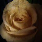 La Rose fece di pietra by Lorraine Creagh
