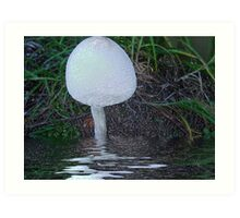 """Toadstool 'wrapped""""... Art Print"""