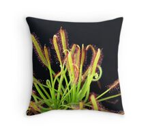 Sun Dew Red Form Capensis Throw Pillow