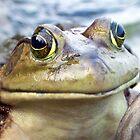 Mr. Frog by campbellart