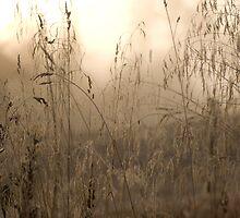 MIsty Grass by Luke Tennant