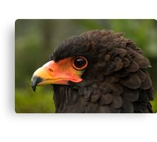Bateleur Eagle Canvas Print