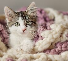 Kitten in Blanket by AndreaBorden