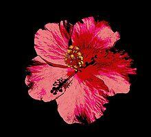 Tropical Pink Hibiscus Flower by LastLittleBird