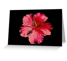 Tropical Pink Hibiscus Flower Greeting Card