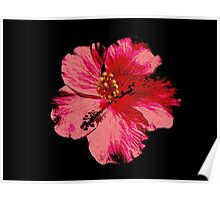 Tropical Pink Hibiscus Flower Poster
