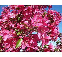 Cherries Jubilee Photographic Print