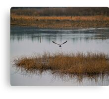 Flying Solo Canvas Print