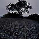 lonely tree on a stony beach by Mark Reed