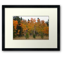 Autunm Bright Framed Print