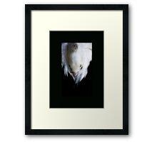Pelican Dreaming Framed Print