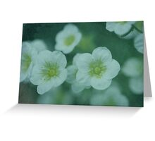 Saxifraga - JUSTART © Greeting Card