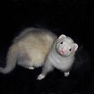 A Ferret Named Bubba by Glenna Walker
