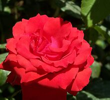 Big Red Flower by vendetta